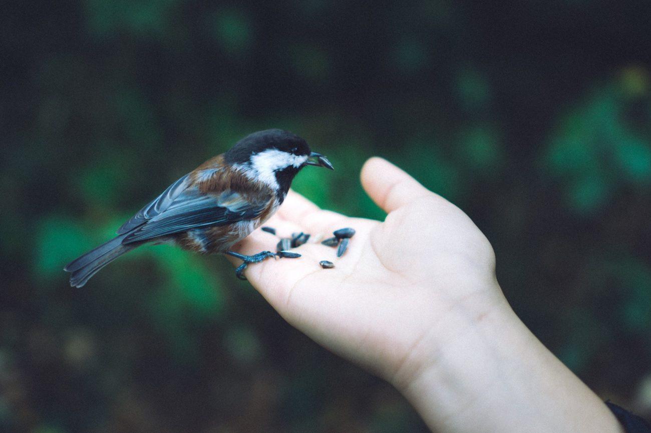 Príroda nám pomôže nazbierať sily aprehĺbi aj náš vzťah sBohom